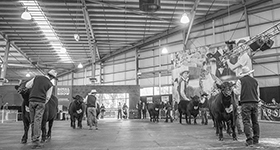 2019 Royal Melbourne Angus Feature Show