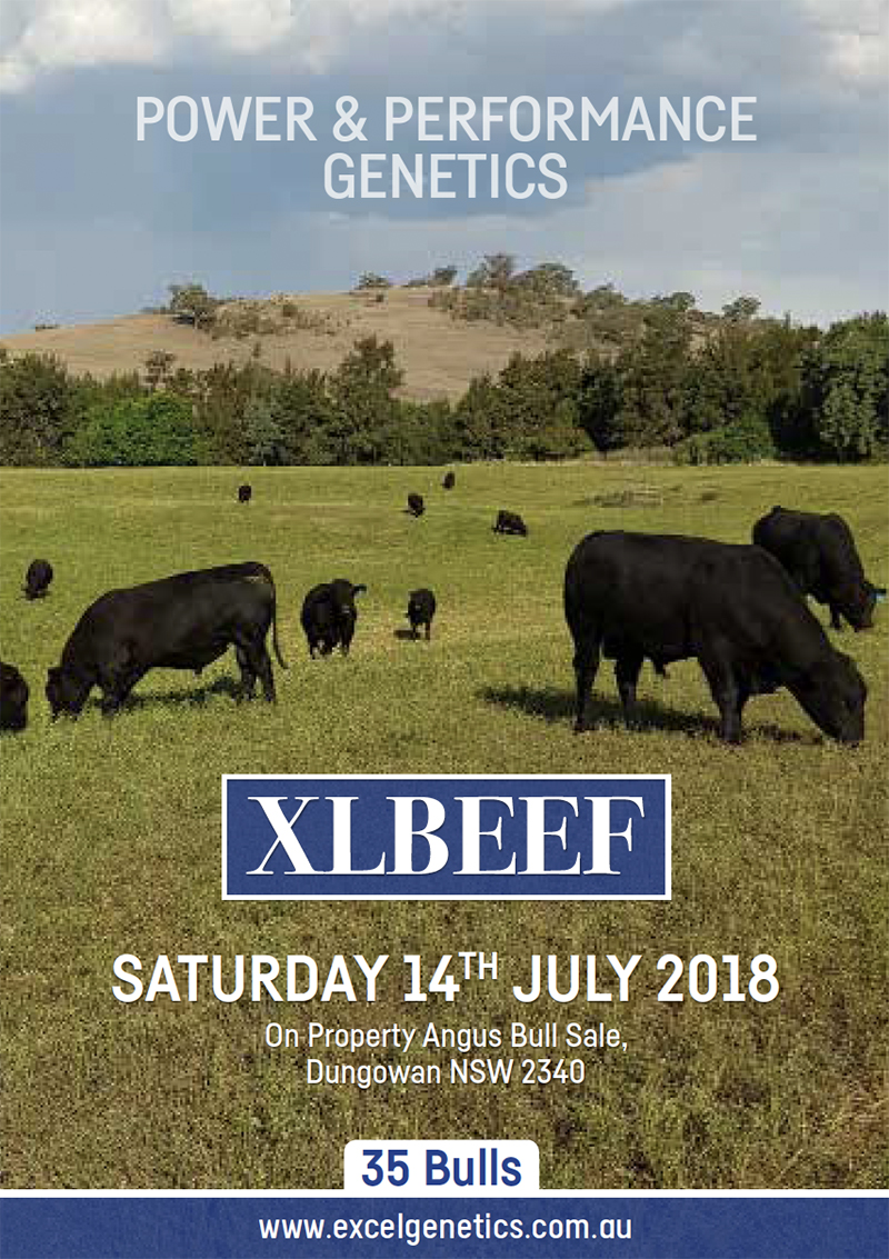 XL-Beef_Sale-Catalogue-Cover