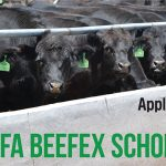 ALFA BeefEx Conference Scholarships