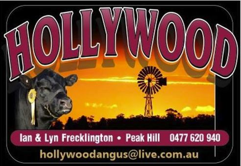 hollywood-angus