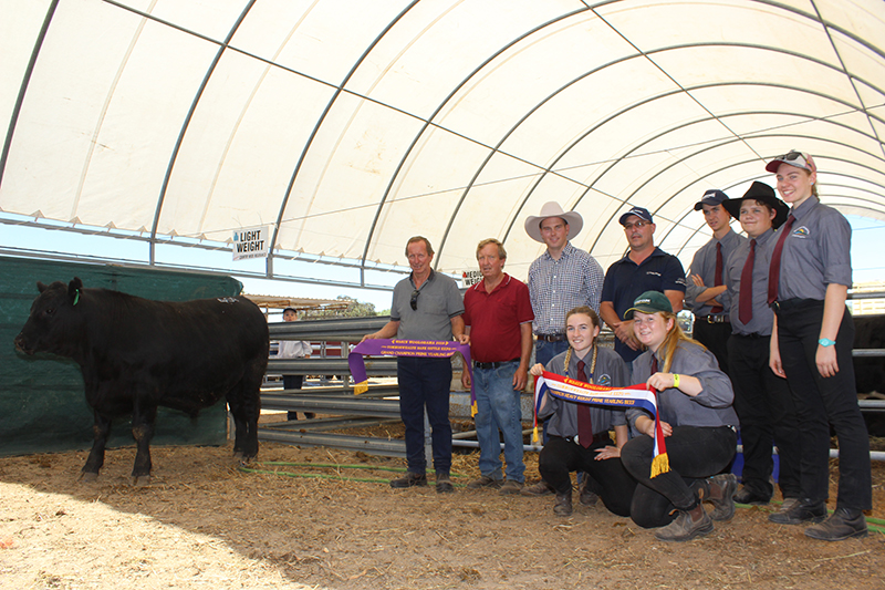 Grand Champion prime yearling and champion heavyweight at Wagin Woolarama was an Angus steer exhibited by WACA Barrogin.  Pictured are Ray (left) & Colin Batt, judge Cameron Petricevich. Mark Pentrose & Students Nyah Mills & Kaileasha Reynolds, Luke Armstrong, Connor Dawson & Alika Gould.  Image Farm Weekly