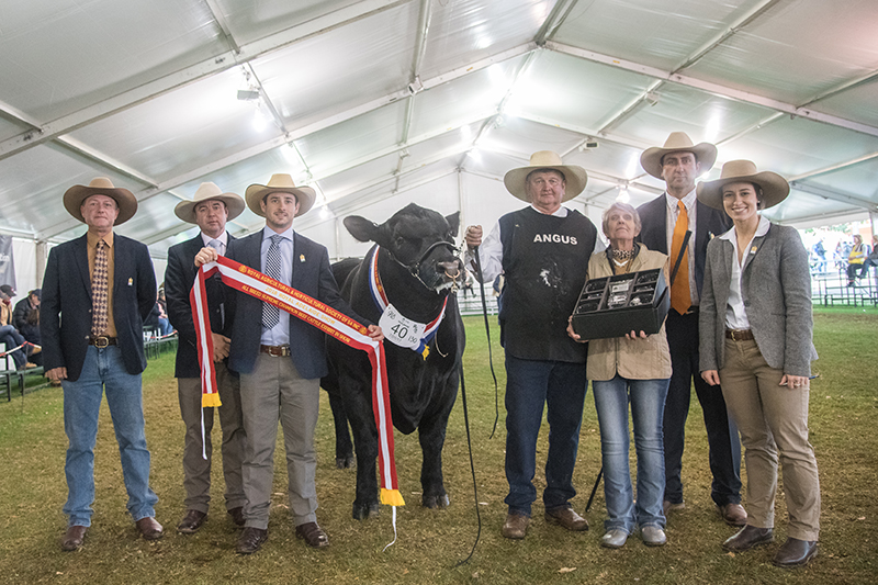All Breeds Supreme Champion Beef Cattle Exhibit