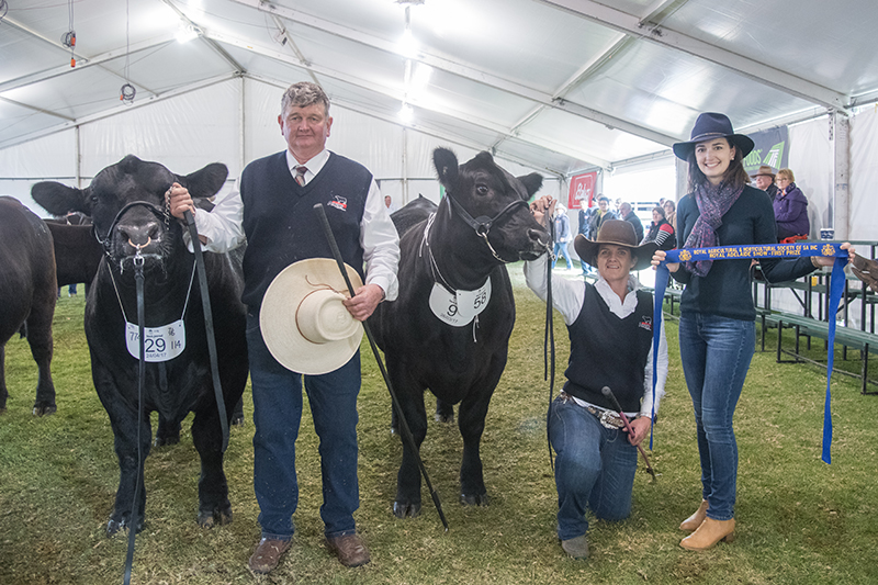 Champion Bull & Heifer - Pine Creek Angus Stud Pty Ltd