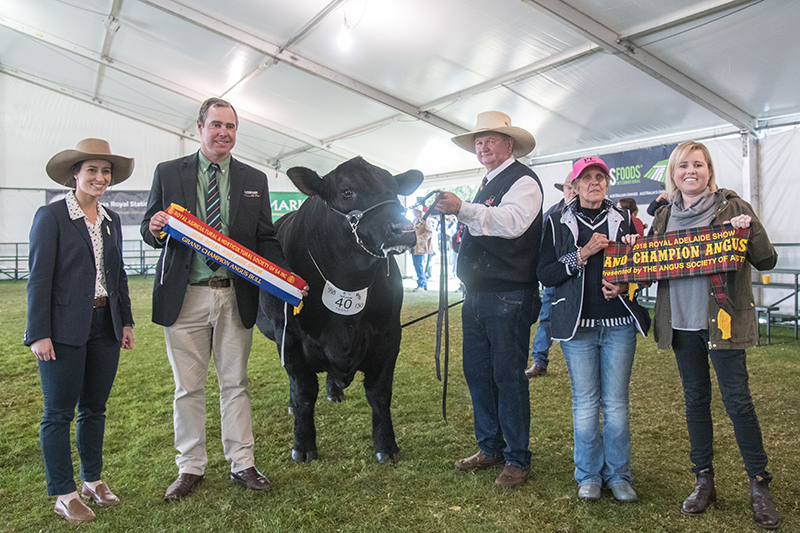 Grand Champion Bull - PC J157 Newsman N003
