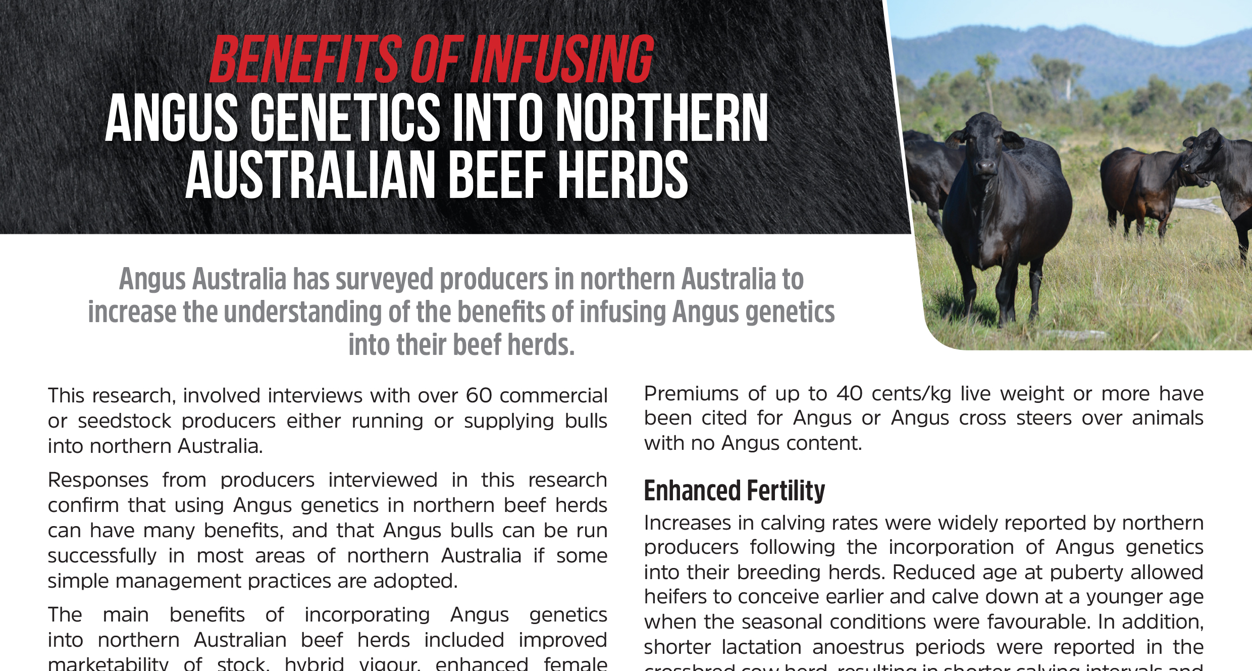 Benefits of Infusing Angus Genetics into Northern Australian Beef Herds