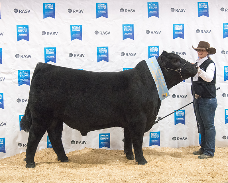 Interbreed Junior Bull - BLACK DIAMOND 5R KODIAK N411 (AI)