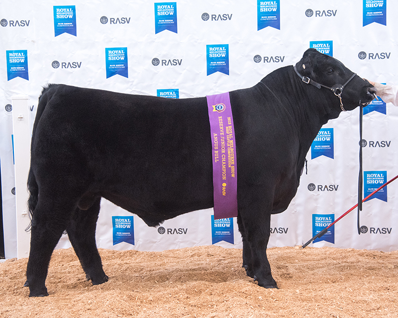 Reserve Junior Champion Bull - HOLLYWOOD NEON LIGHTS N9