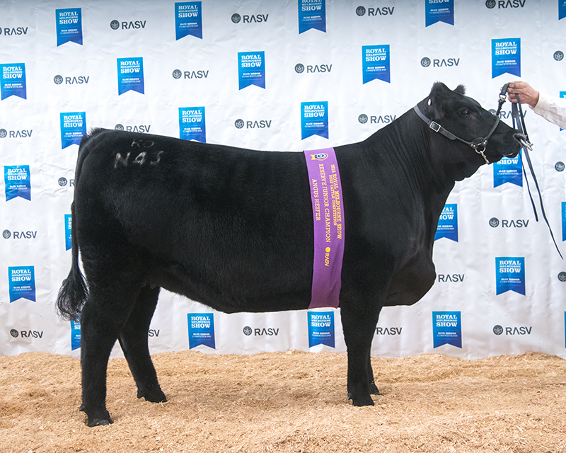 Reserve Junior Champion Female - KO DREAM N43