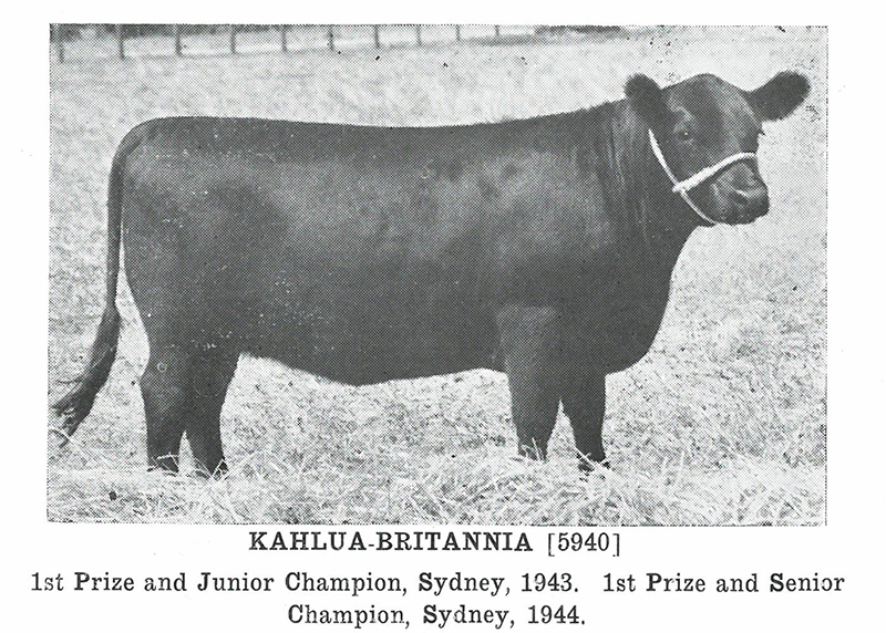 Herd Book of Australia, Volume 10: Published by the Aberdeen-Angus Herd Book Society of Australia, 14th August 1944.