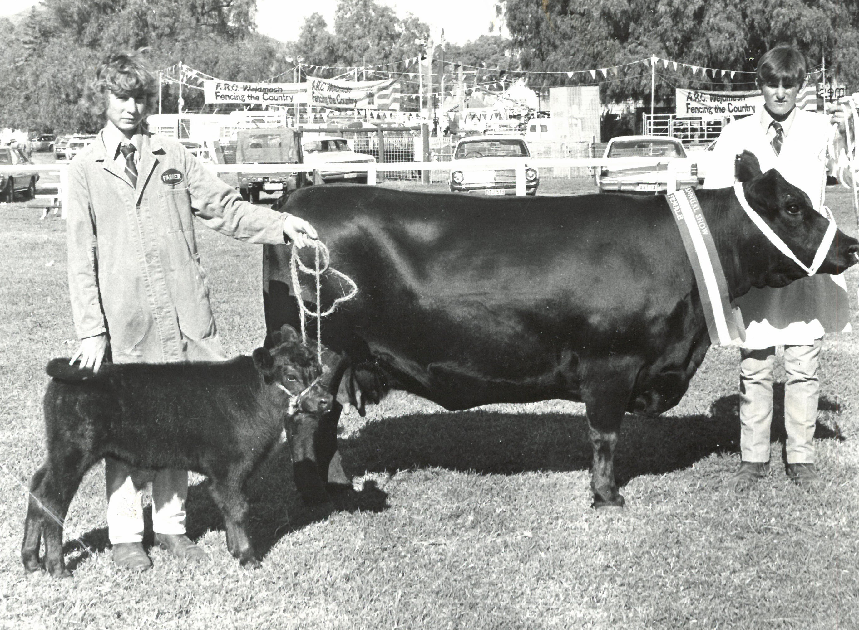 Sydney Royal 1979 Reserve Champion Angus Female Ben Nevis Kiwi (T51)