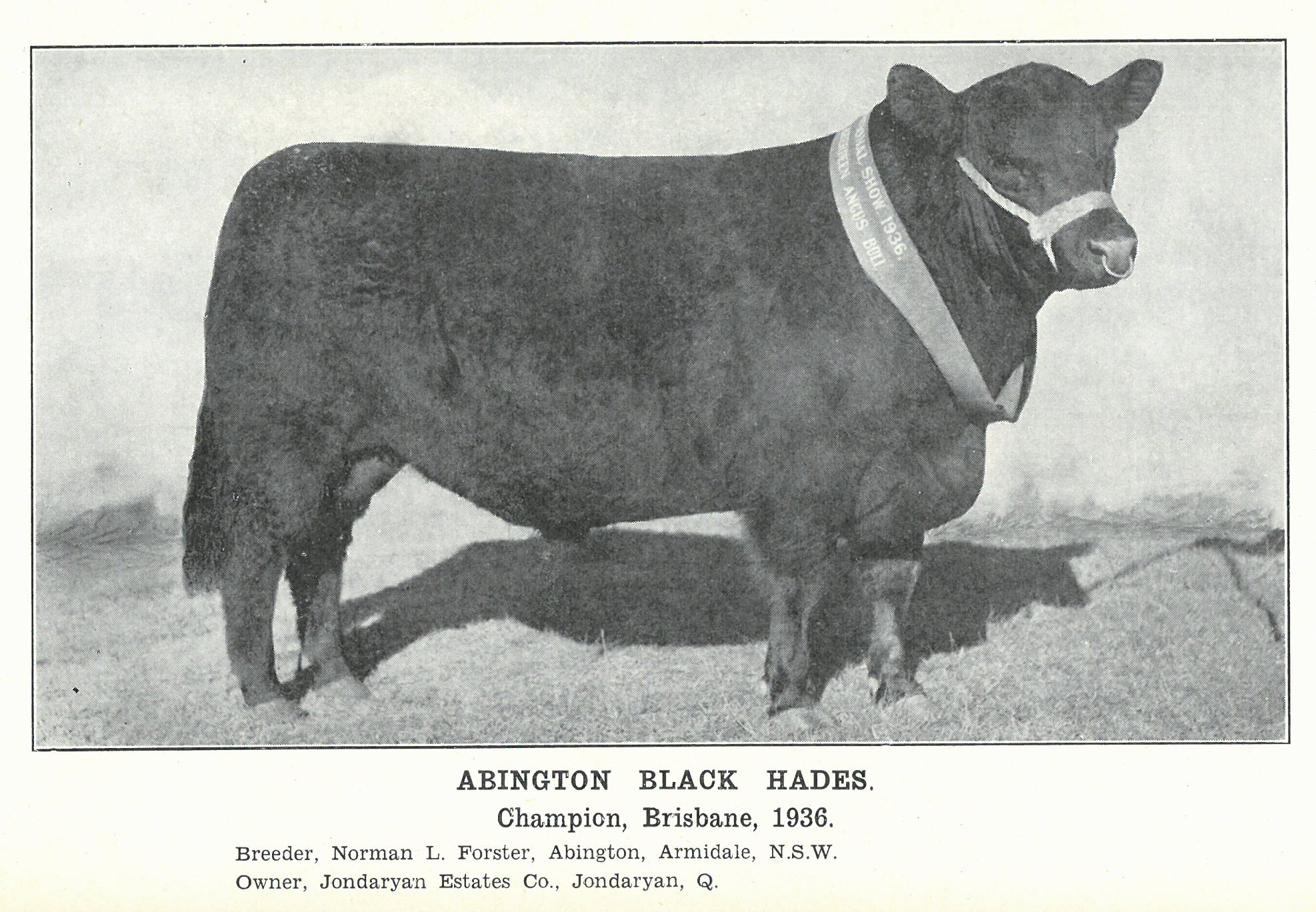 Abington Black Hades