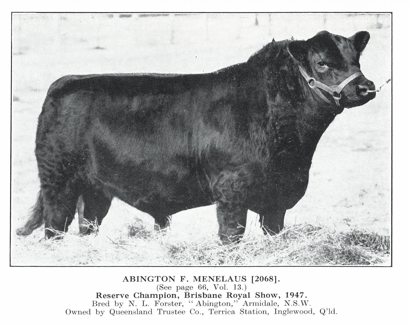 Abington F Menelaus