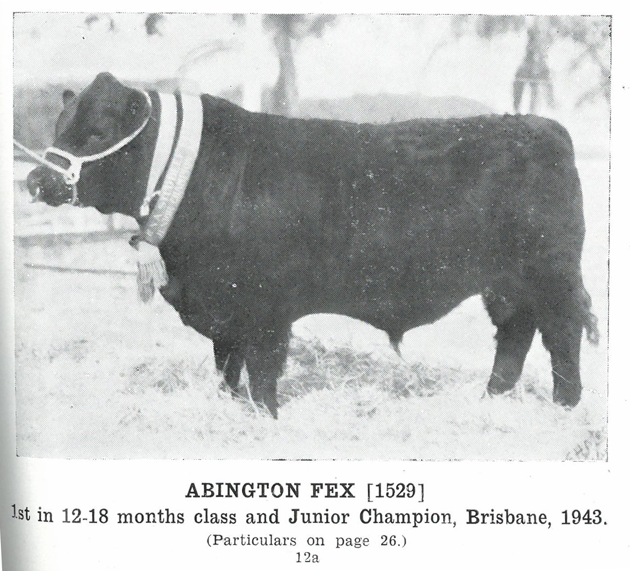 Abington Fex