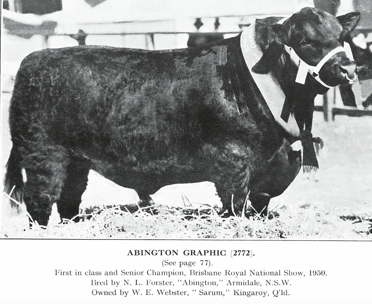 Abington Graphic
