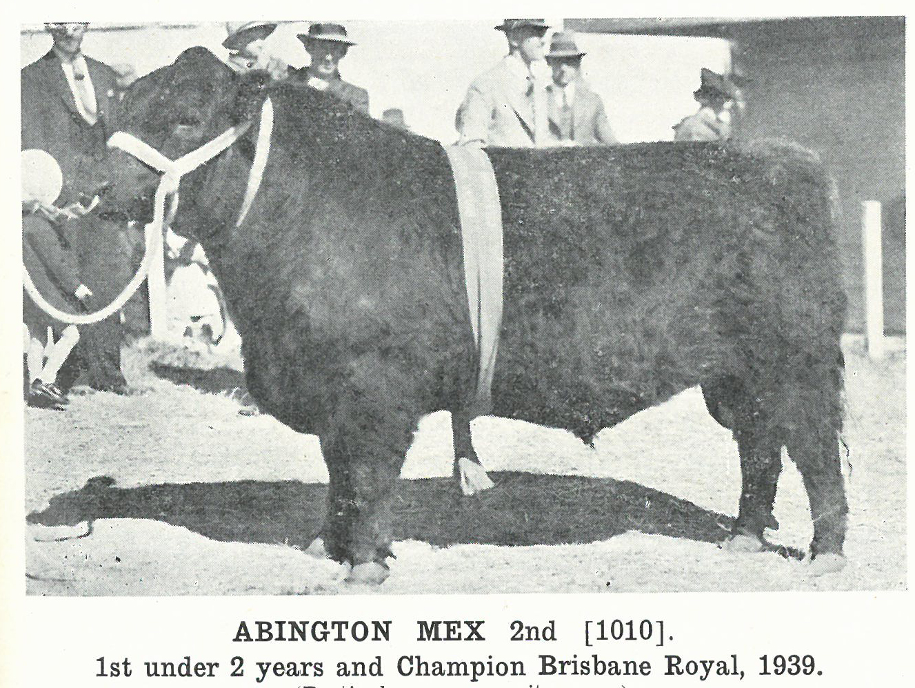 Abington Mex