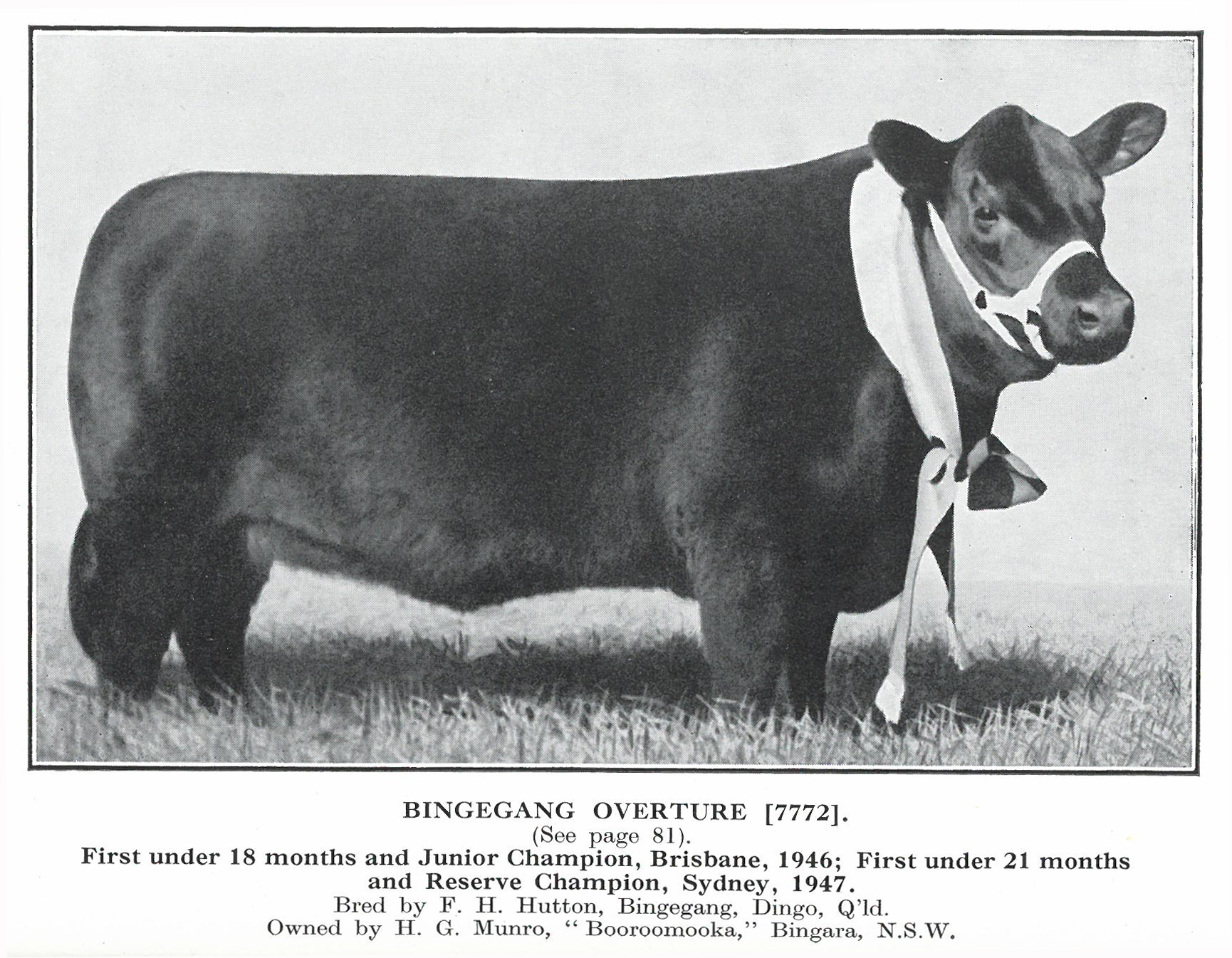 Bingegang Overture