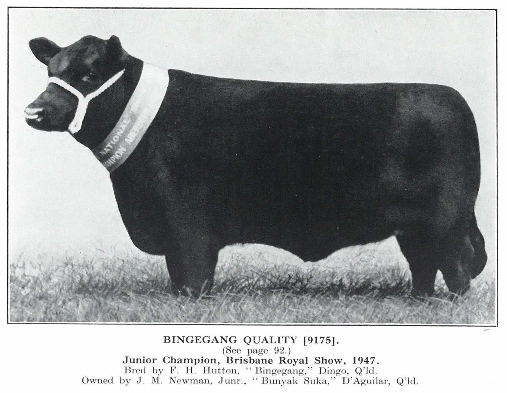 Bingegang Quality