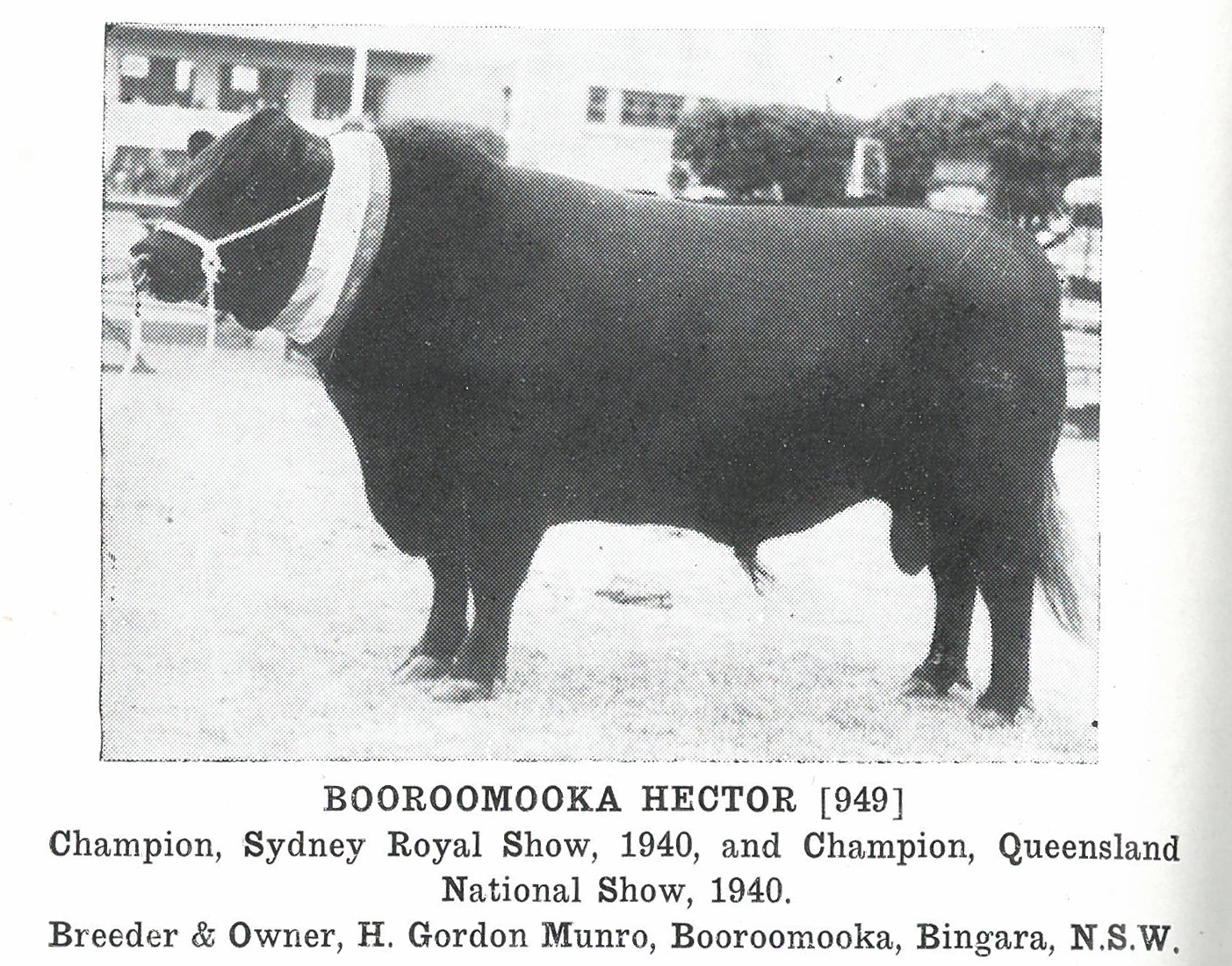 Booroomooka Hector