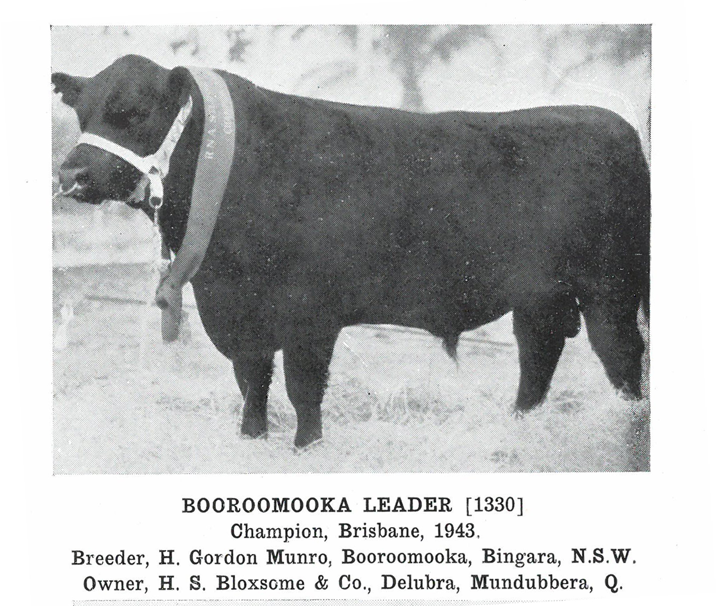 Booroomooka Leader