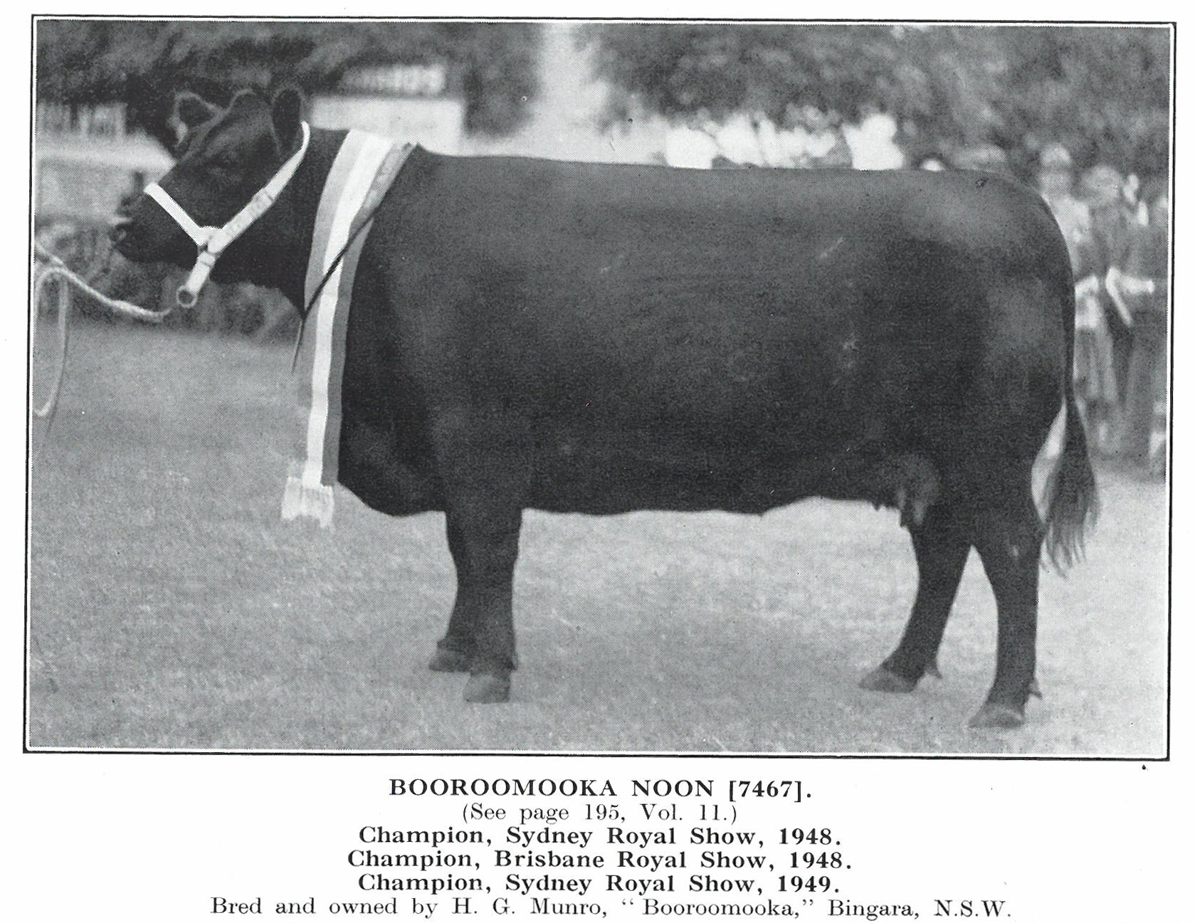 Booroomooka Noon