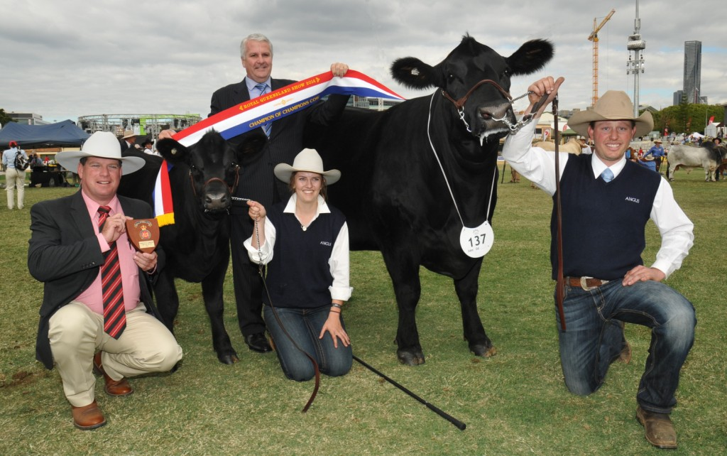 EKKA 2014 Champion of Champion Cow