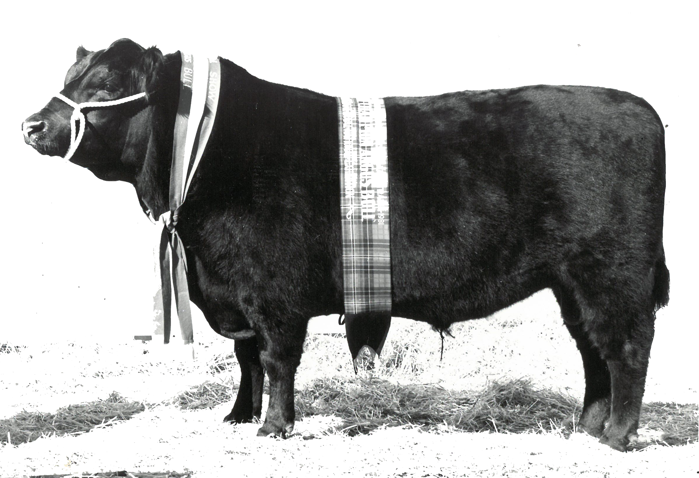 Gibraltar Massive Y32 