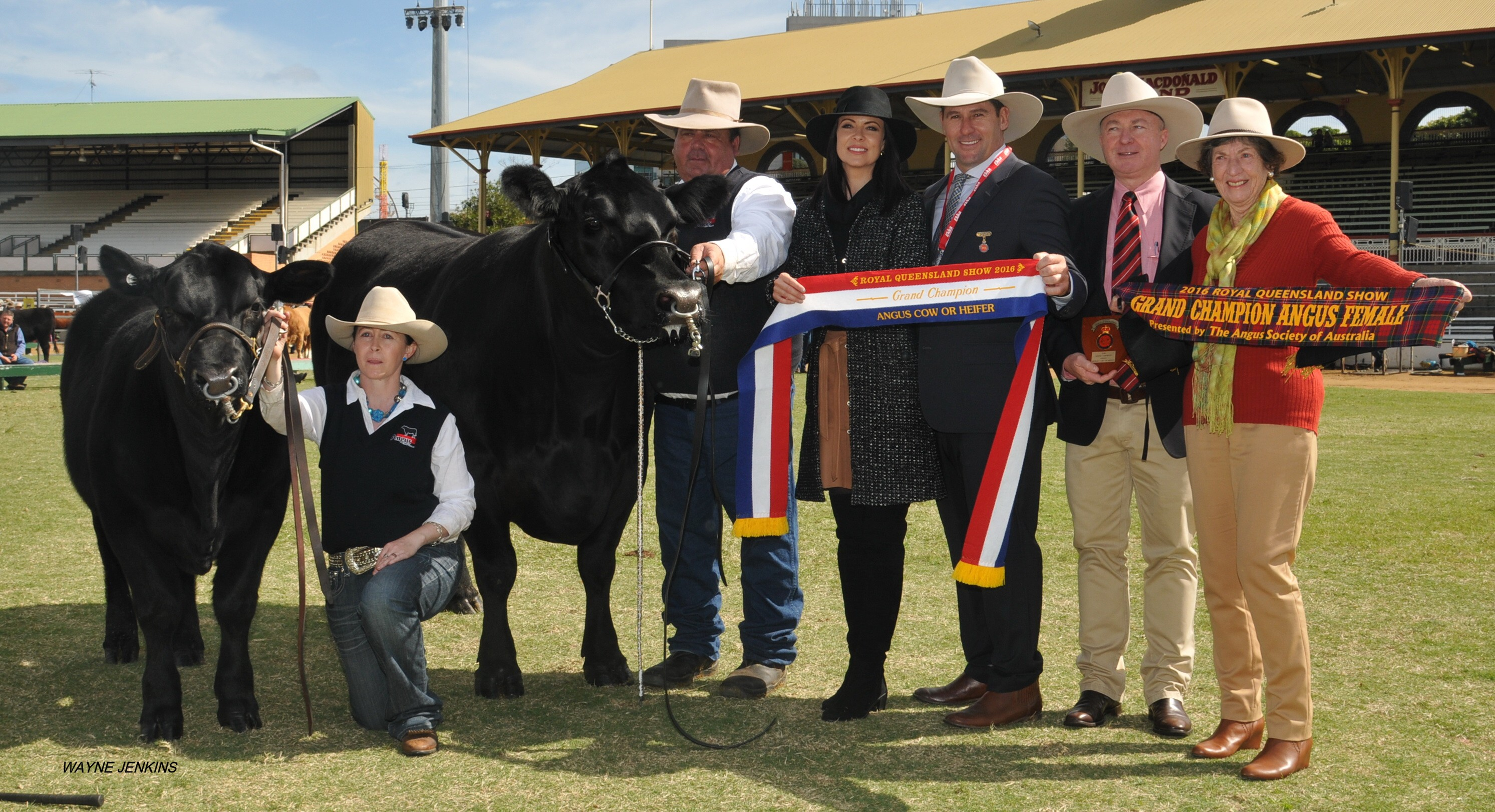 EKKA 2016 Grand Champion Angus Female