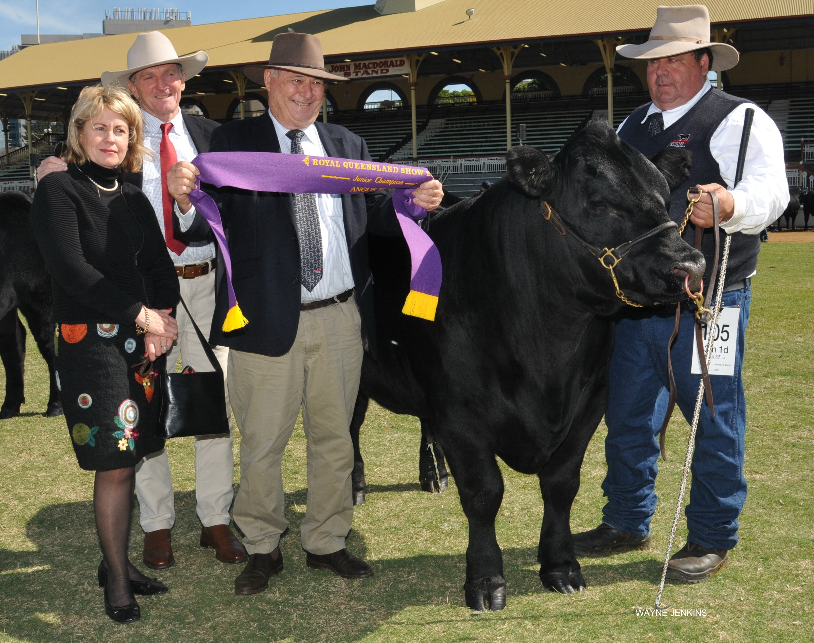 EKKA 2016 Junior Champion Angus Bull