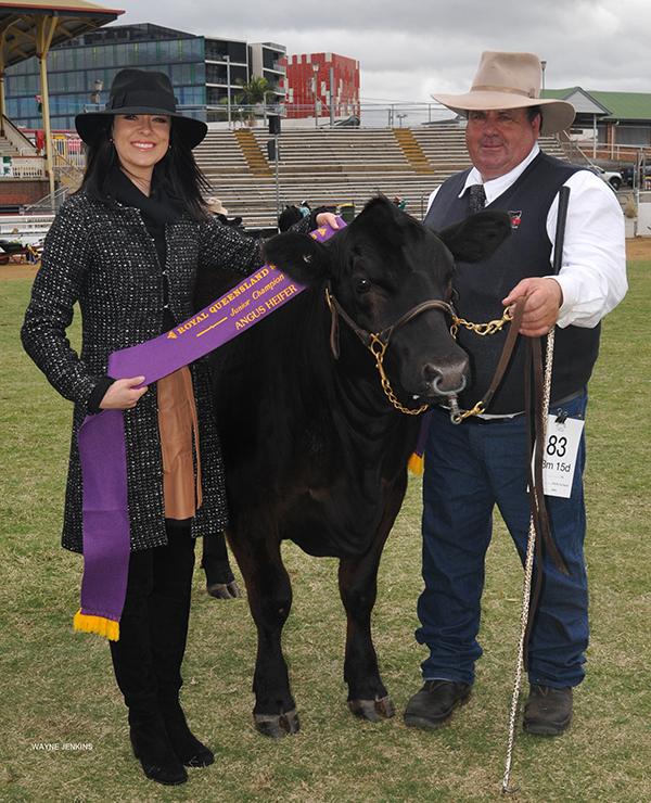 EKKA 2016 Junior Champion Angus Female