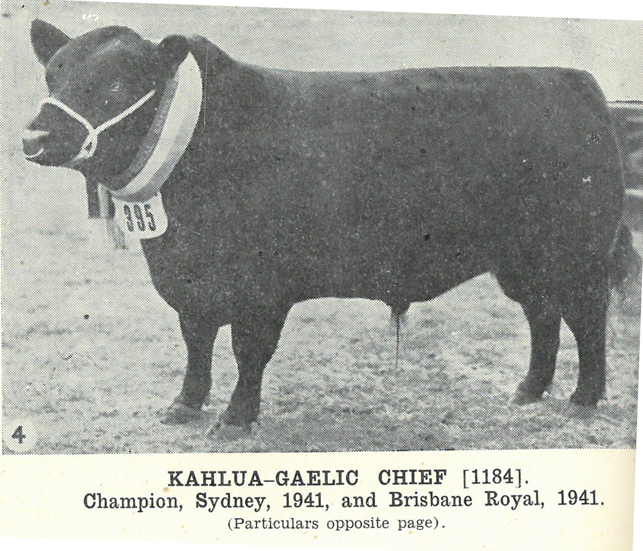 Kahlua-Gaelic Chief