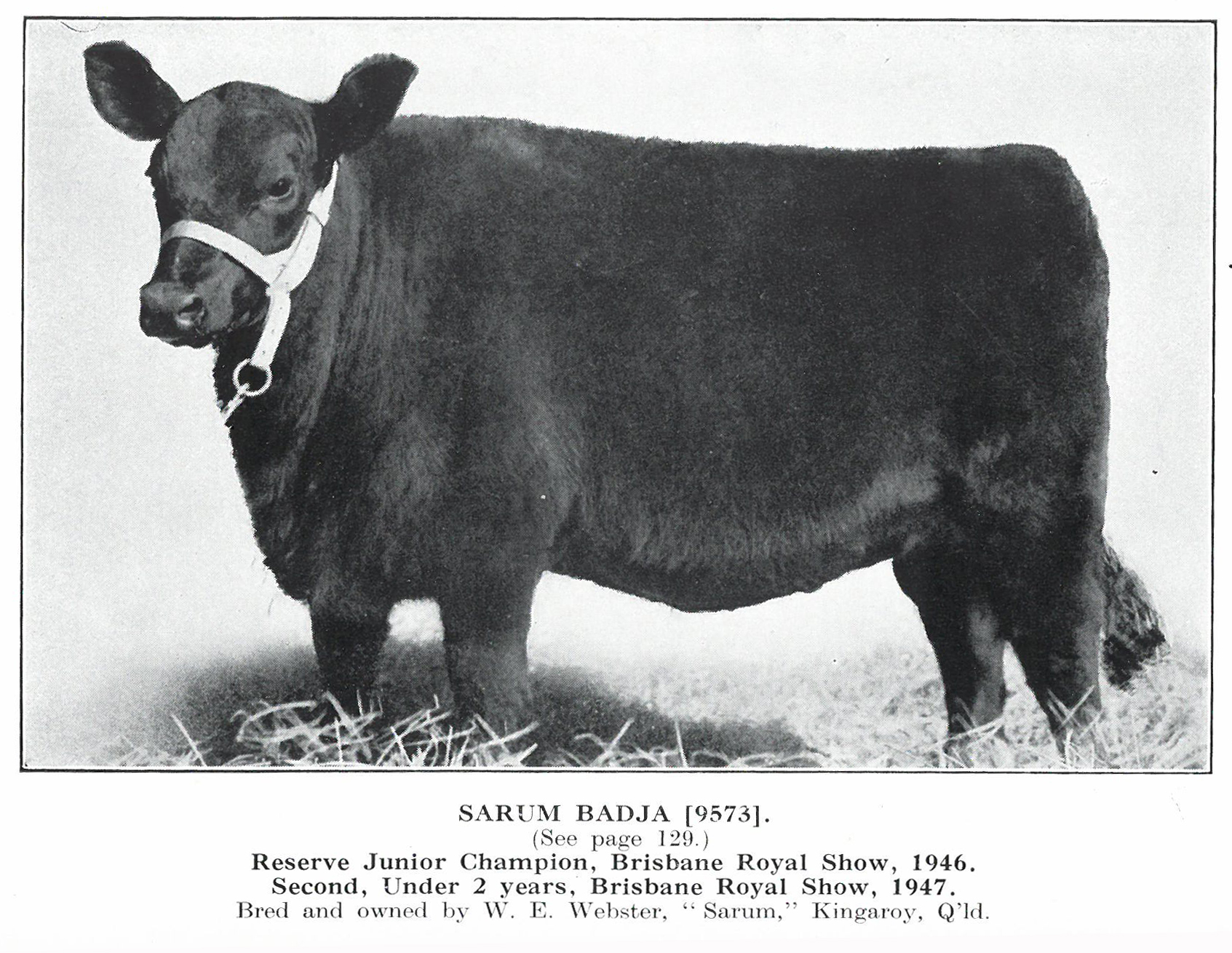Sarum Badja