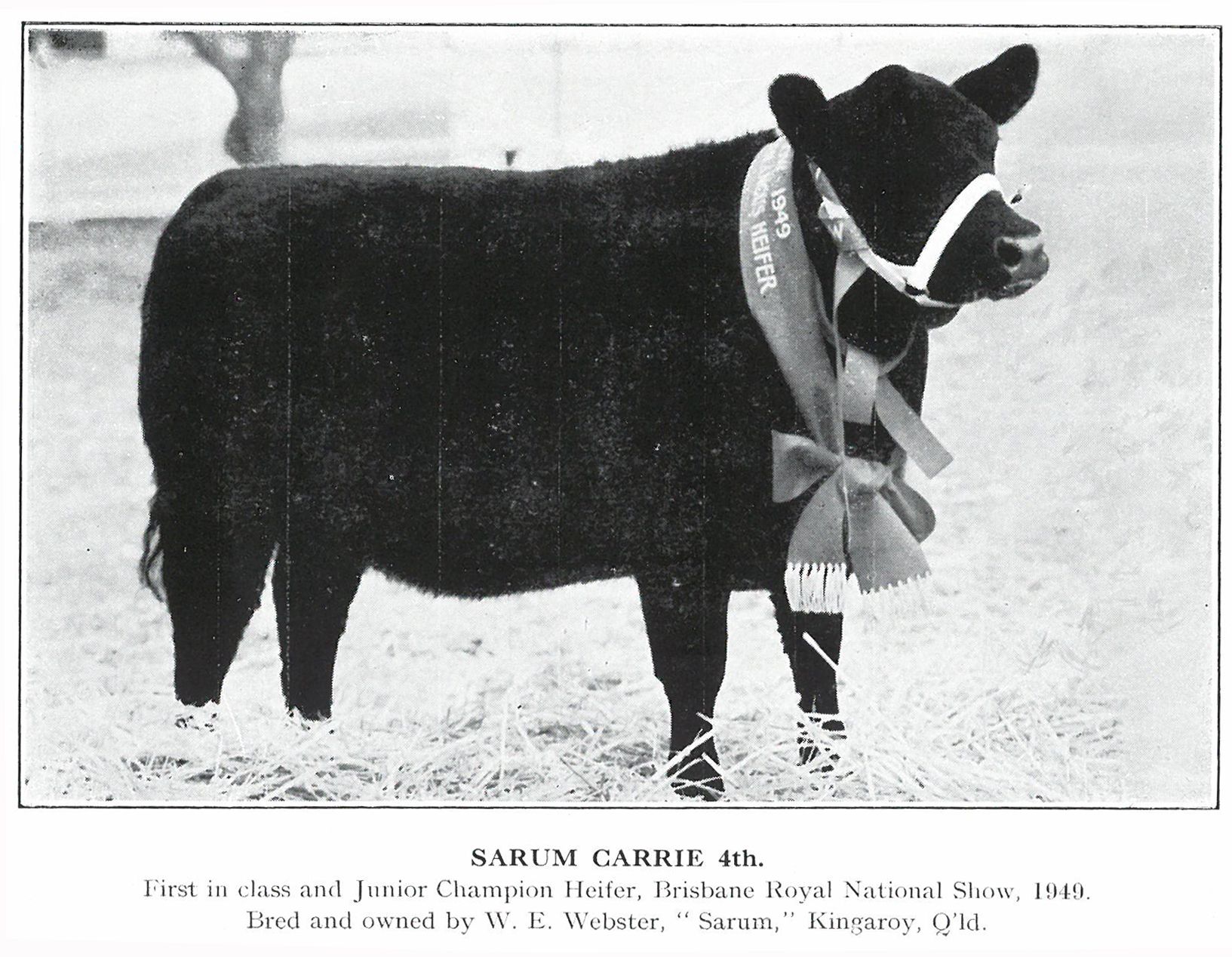 Sarum Carrie 4th