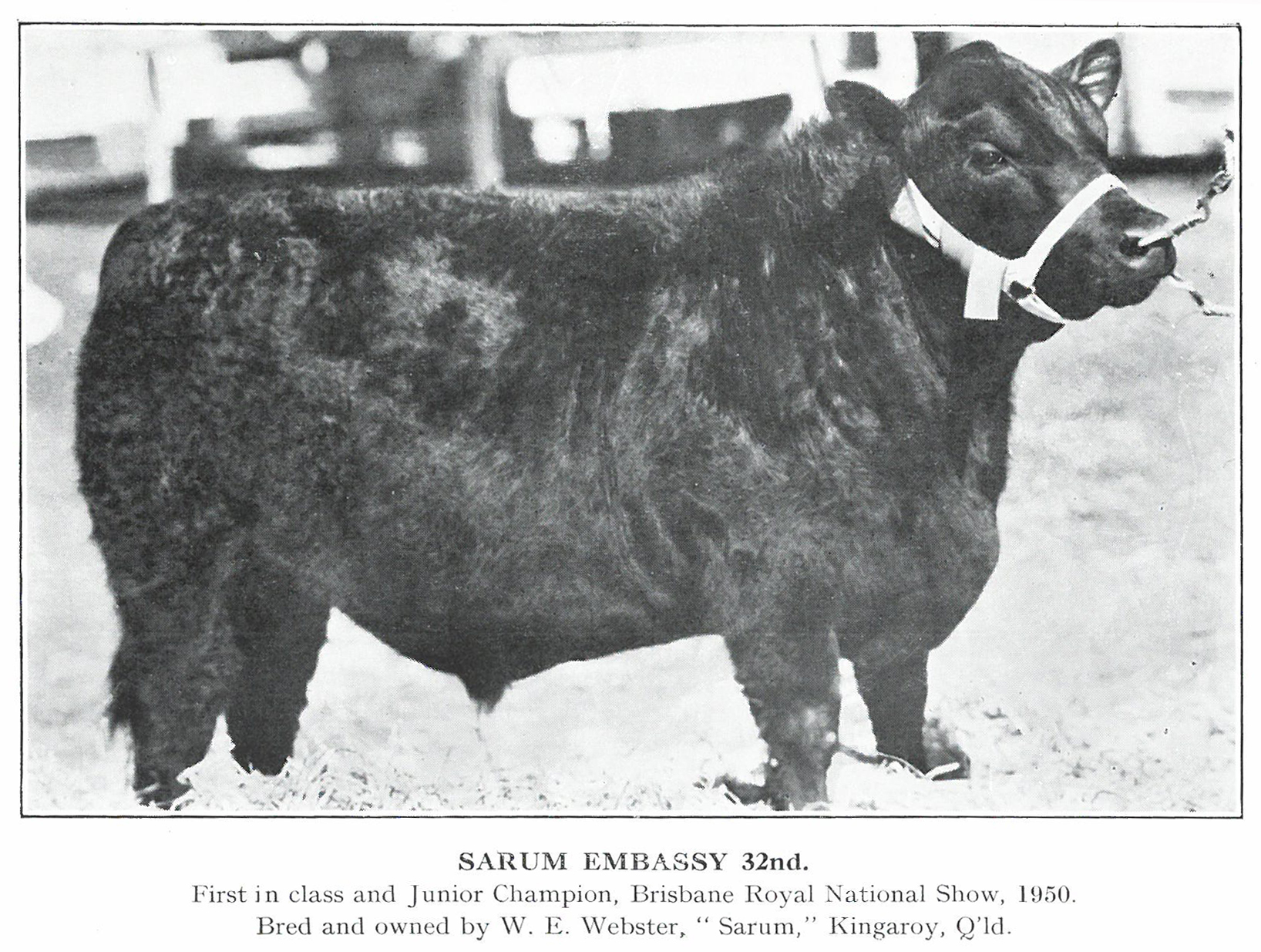 Sarum Embassy  32nd 