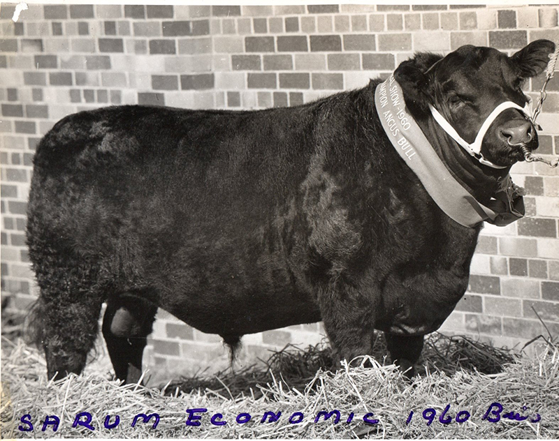 Sarum Economic 1960, Brisbane 