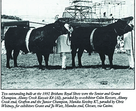 Senior & Grand Champion Angus Bull and Junior Angus Bull