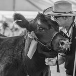 2019 Angus Feature Show at Sydney Royal Easter Show entries NOW OPEN!