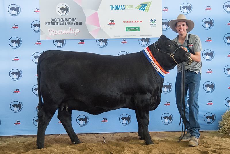 Champion Senior Heifer