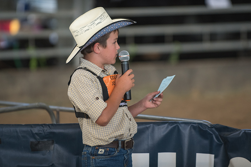 Junior Cattle Judging