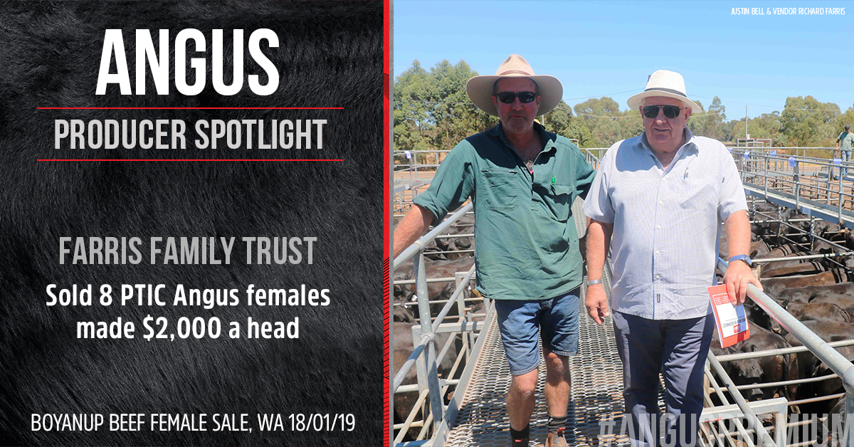 Justin Bell and vendor Richard Farris at the Elders Boyanup Beef Female Sale. Image courtesy of Farm Weekly