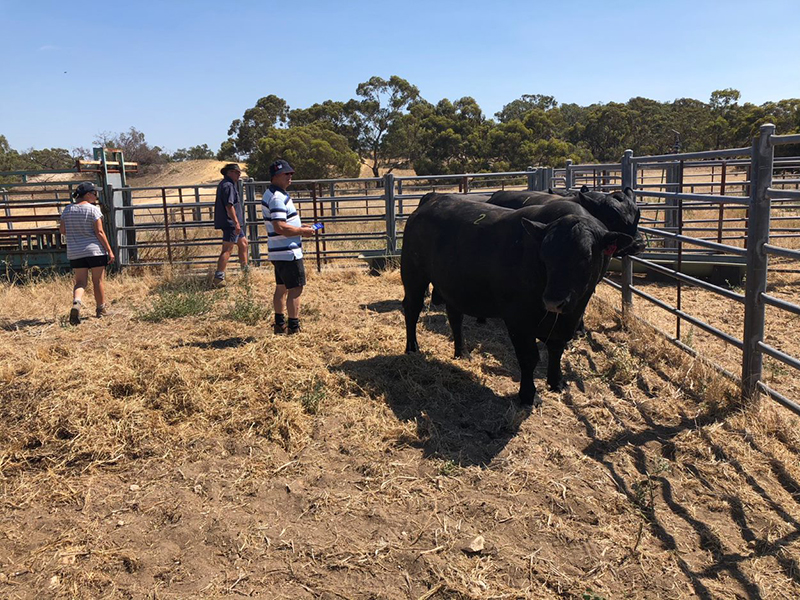 Visitors to Bull Oak Well Open Day, SA