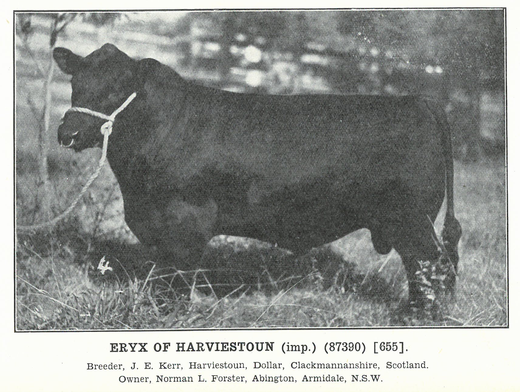 Eryx of Harviestoun