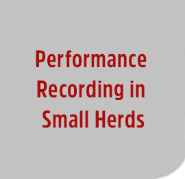 Performance-Record