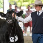 Last chance to enter non-RAS events at Sydney Royal