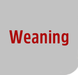 Weaning-2