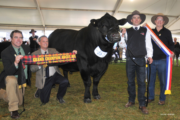 2015 Royal Adelaide Grand Champion Angus Bull