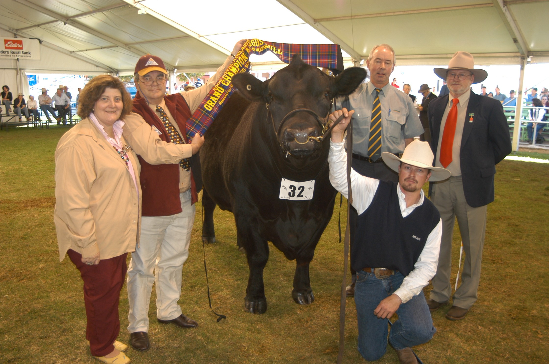 2006 Royal Adelaide Grand Champion Angus Bull