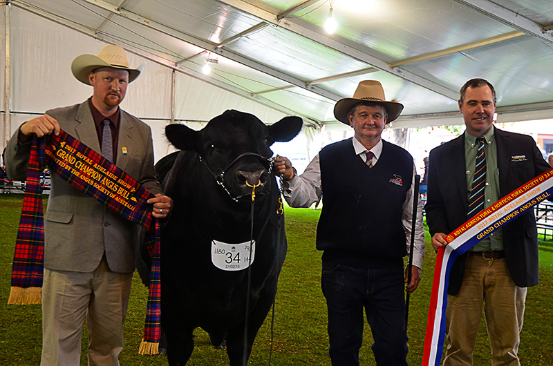 Royal Adelaide 2017 Grand Champion Angus bull