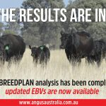 Updated EBVs now available: Mid May 2019