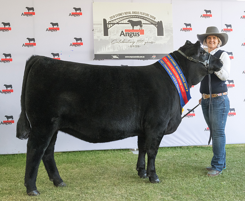 Calf Champion female