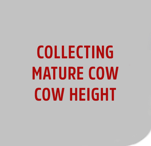 Collecting-COW-HEIGHT